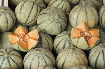 Melon (gros)